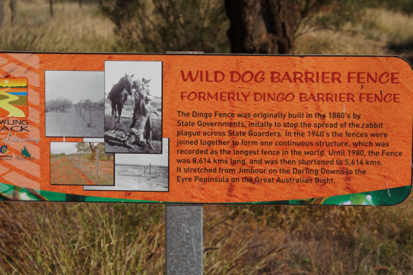 Wild Dog Fence at Hungerford on the NSW/Qld state border